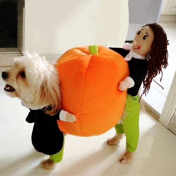 Popular 2020 Halloween Costumes (28 pics)