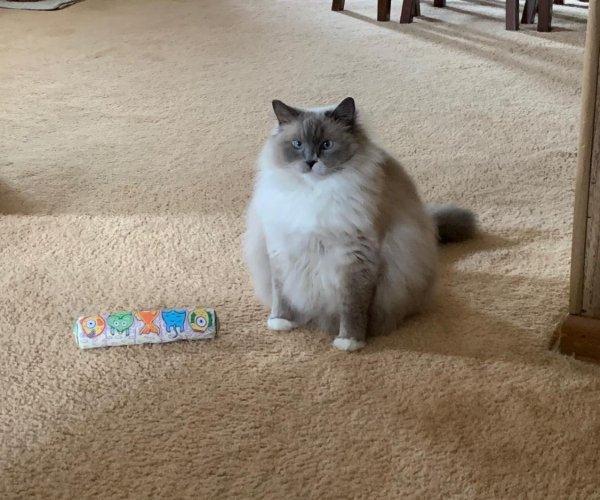 Hilarious Cats (27 pics)