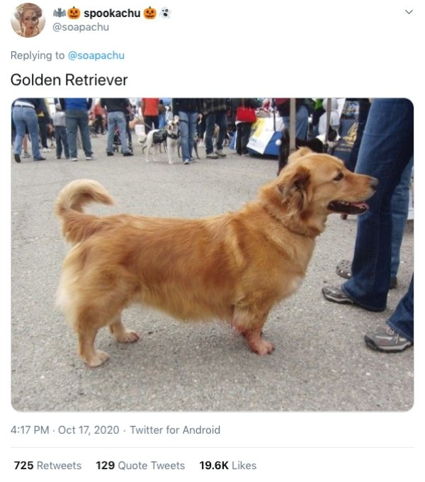 Corgis Crossed With Other Dog Breeds (21 pics)