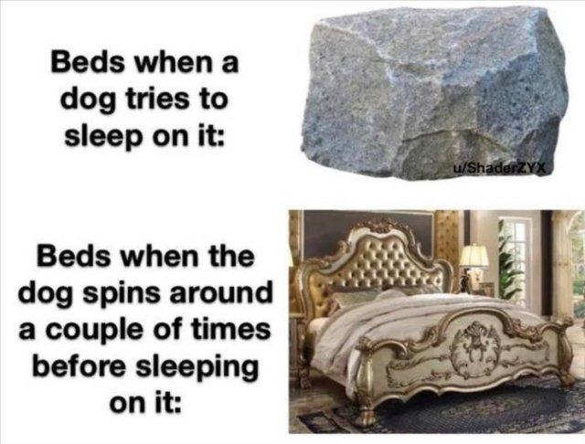 Random Funny Memes (91 pics)
