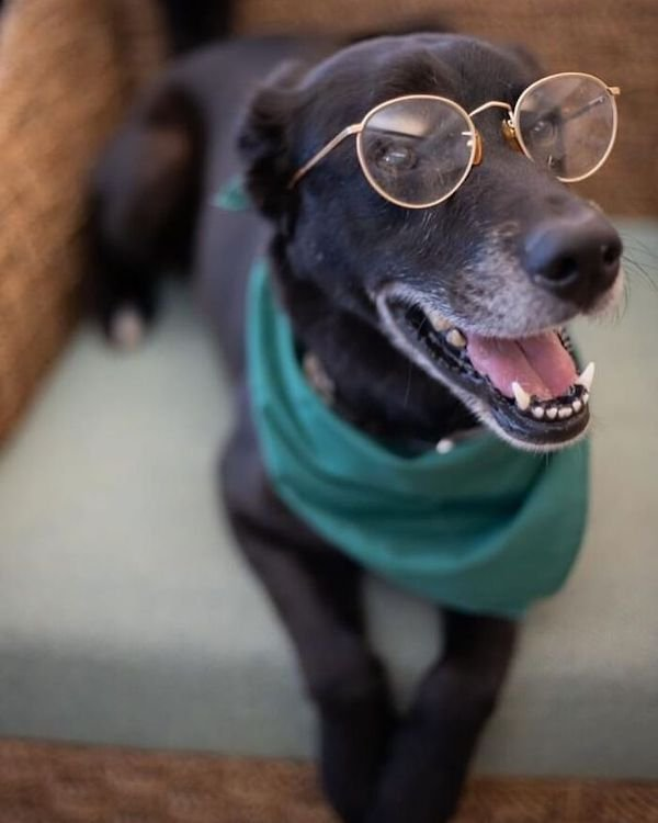 Adopted Elderly Shelter Pets (33 pics)