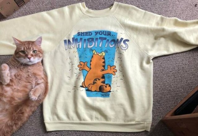 Thrift Store Treasures (22 pics)
