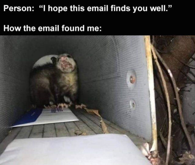 Random Funny Memes (169 pics)