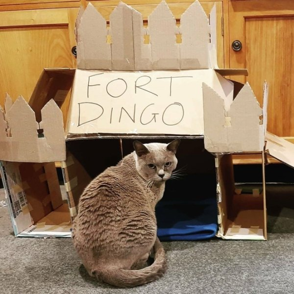 DIY Cat Forts (30 pics)