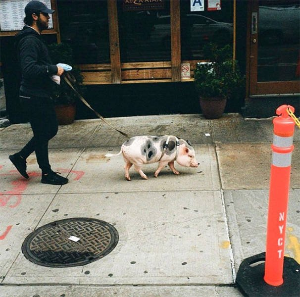 New York's Hipsters (20 pics)