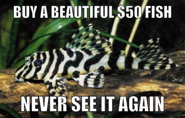 Aquarium Memes (34 pics)