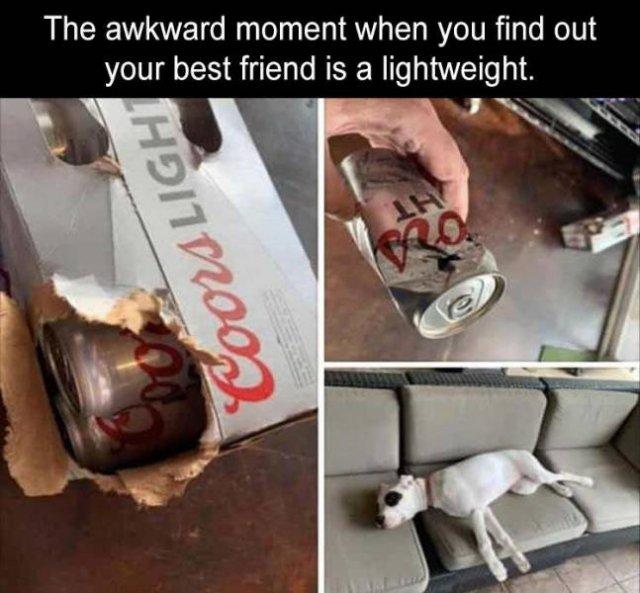 Random Funny Memes (81 pics)