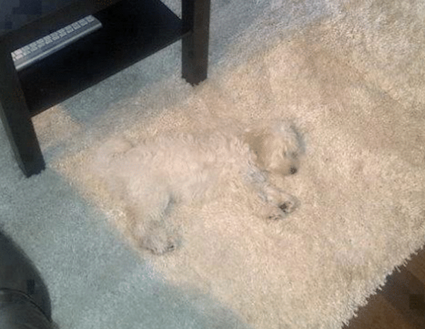 Accidental Camouflage (29 pics)