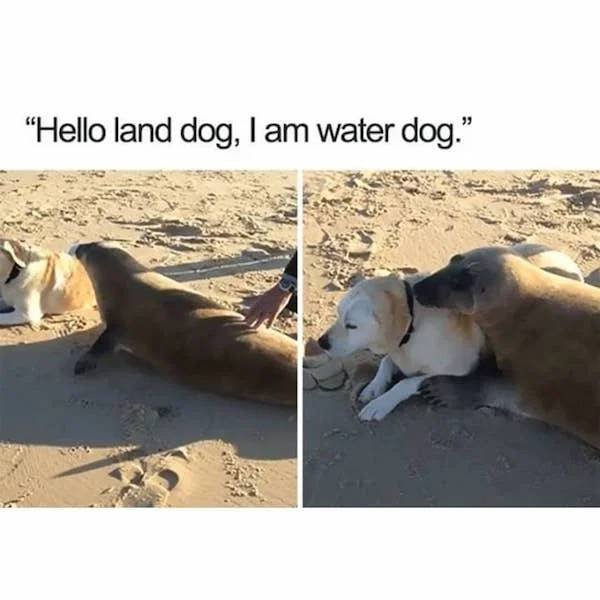Humor About Dogs (34 pics)