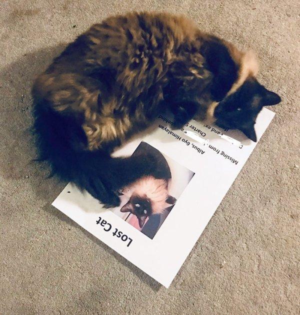 Hilarious Cats (41 pics)