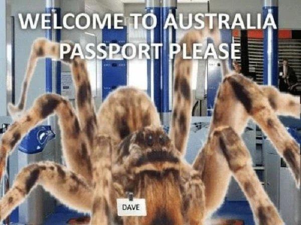 It May Happen Only In Australia (18 pics)