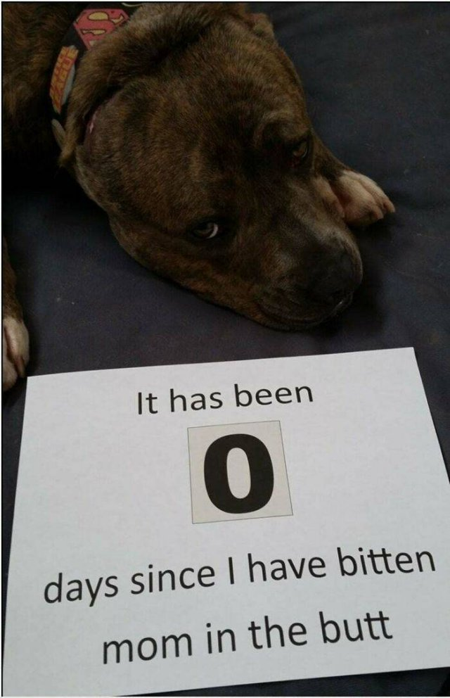 They Did Their Best (40 pics)