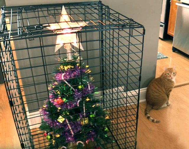 Christmas Trees And Pets (22 pics)