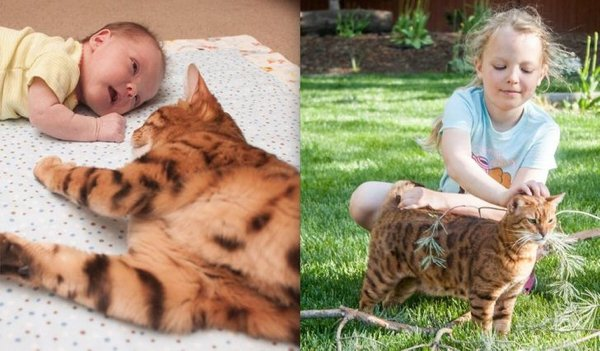 True Friendship Between People And Animals (19 pics)