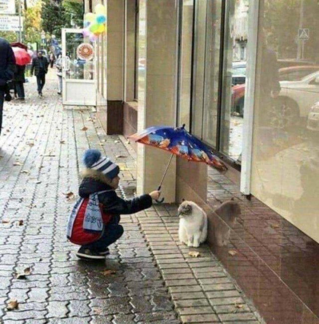 No Words Needed For These Pictures (52 pics)