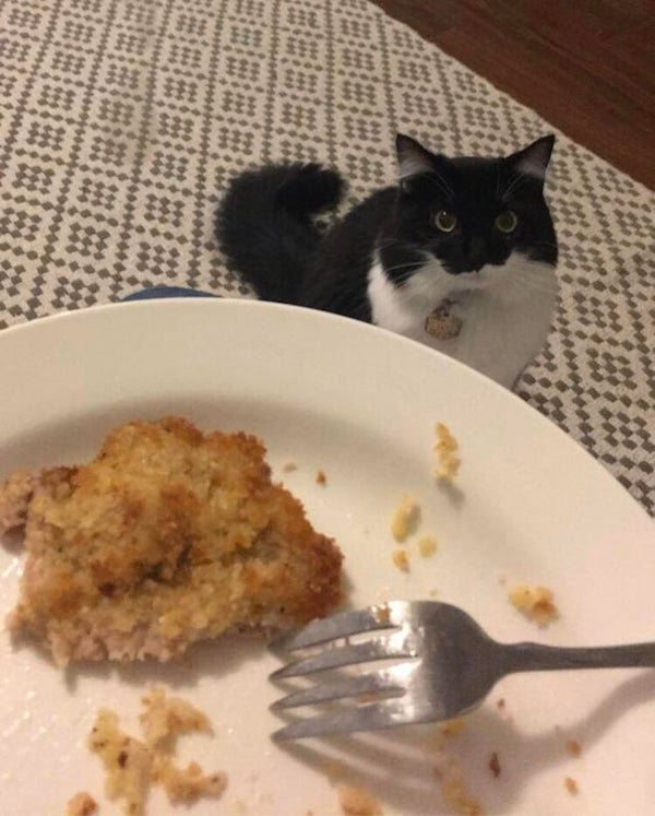 Pets Staring At Food (37 pics)
