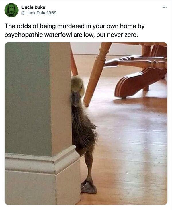 Random Funny Memes (31 pics)