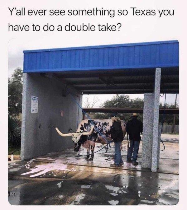 Texas Memes (33 pics)