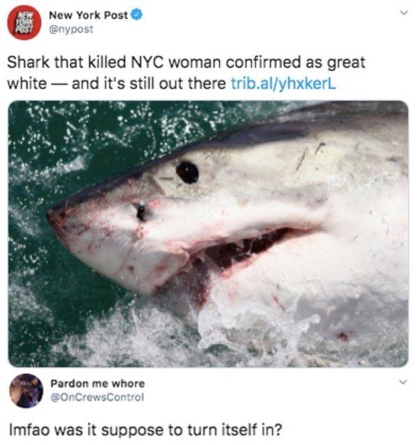 Funny Tweets (93 pics)