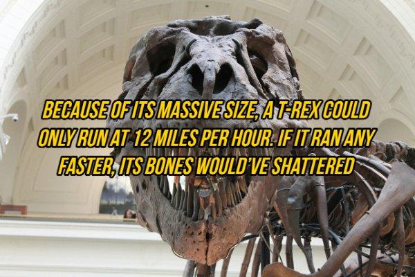 Interesting Facts (19 pics)