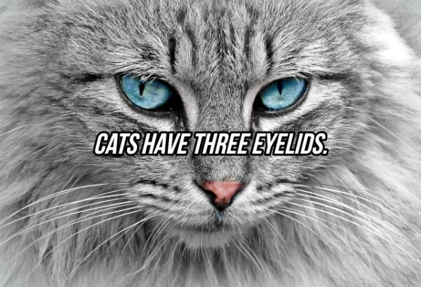 Facts About Eyes (20 pics)