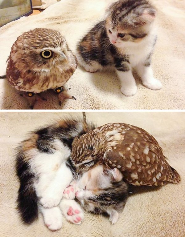 Wholesome Pictures (20 pics)