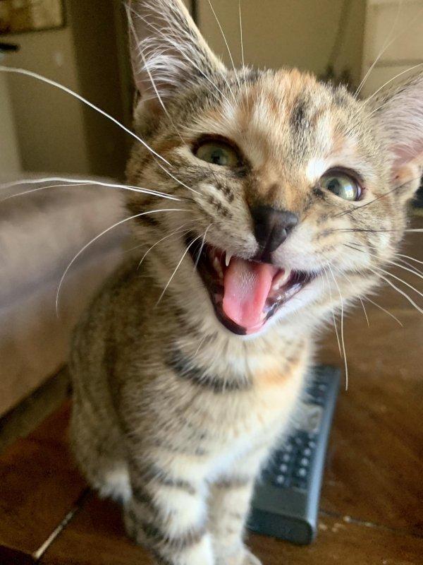 Hilarious Cats (31 pics)