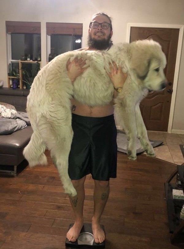 Giant Pets (19 pics)