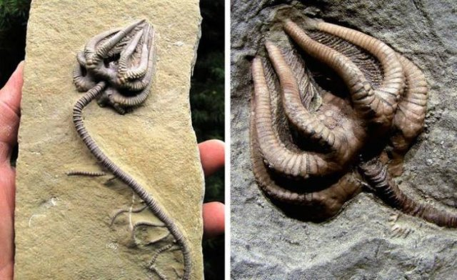 Amazing Historical Finds (15 pics)