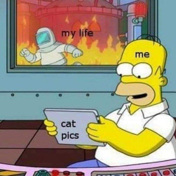 Hilarious Memes (35 pics)