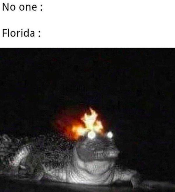 Florida Memes (31 pics)