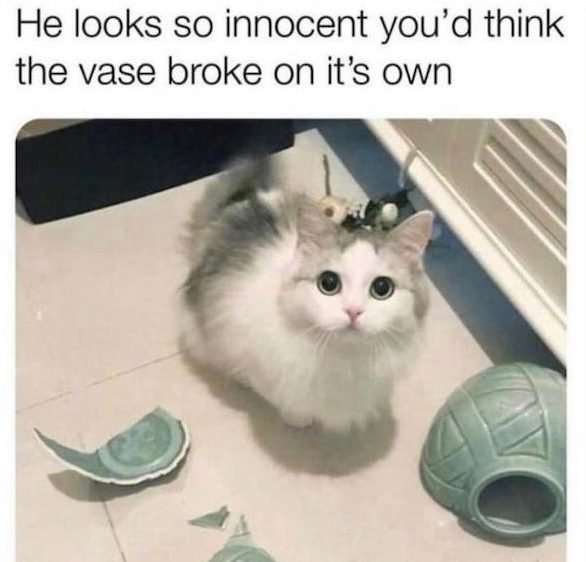 Pet Memes (30 pics)