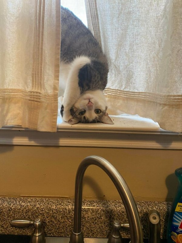 These Cats Are Broken (29 pics)