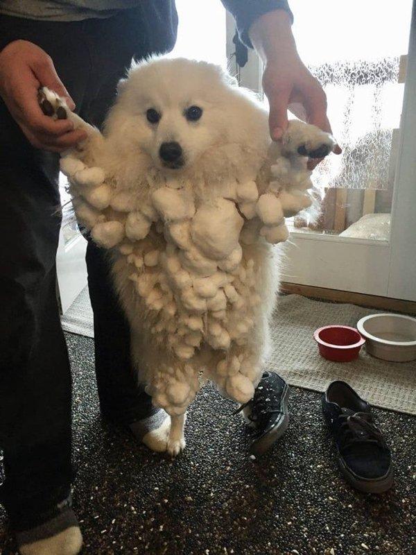 Amusing Dogs (22 pics)