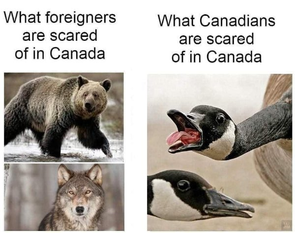 Only In Canada (22 pics)