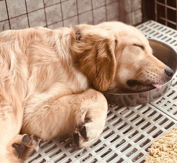 أحيانًا تنام الكلاب في أوضاع غريبة (29 صورة)