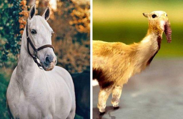Animal's Prehistoric Ancestors (15 pics)