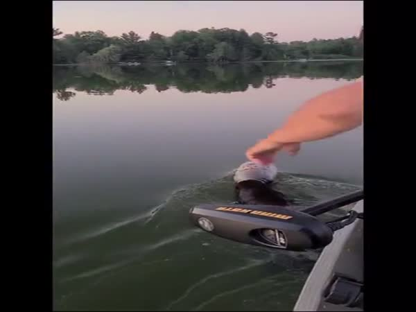 Boaters In Wisconsin Save A Swimming Bear