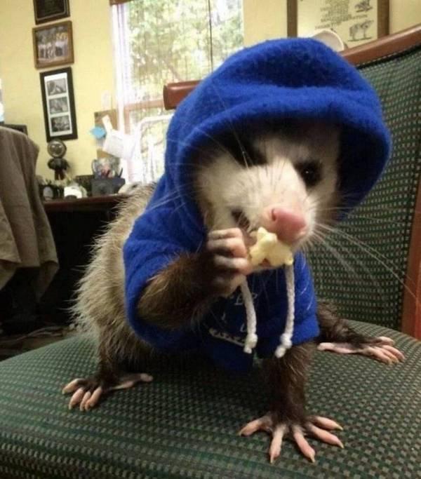 Hilarious Animals (56 pics)