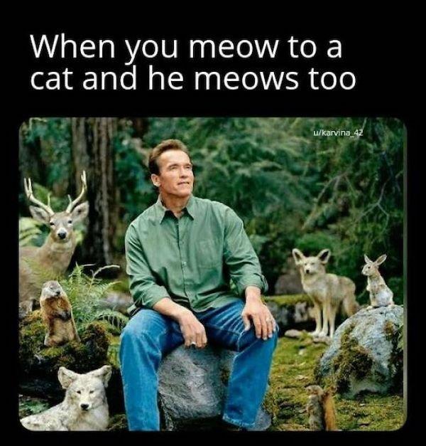 Cat Memes (30 pics)