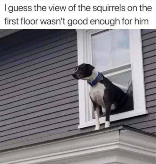 Random Funny Memes (147 pics)