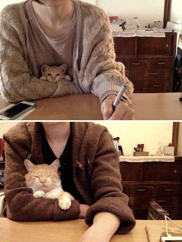 Look At These Kittens (31 pics)
