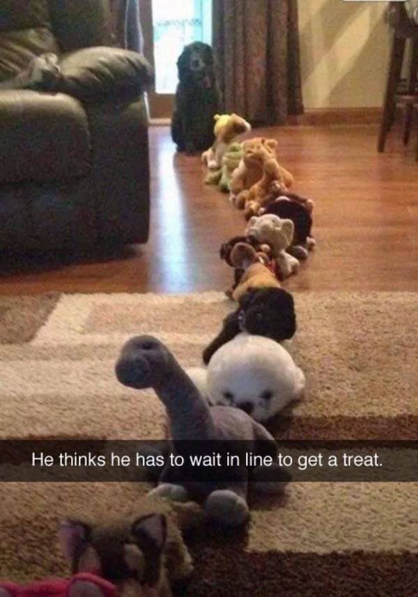 Hilarious Animals (59 pics)