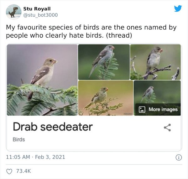 Weird Bird Species Names (28 pics)