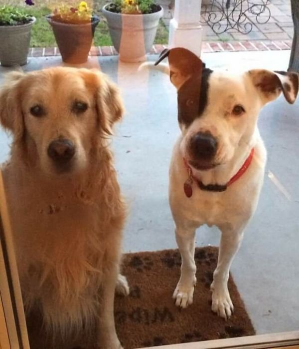 Missing Dogs Reunite Again With Their Owners (26 pics)