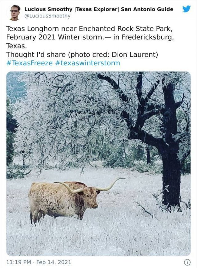 Texas Is Fighting With The Coldest Winter In Over 30 Years (39 pics)
