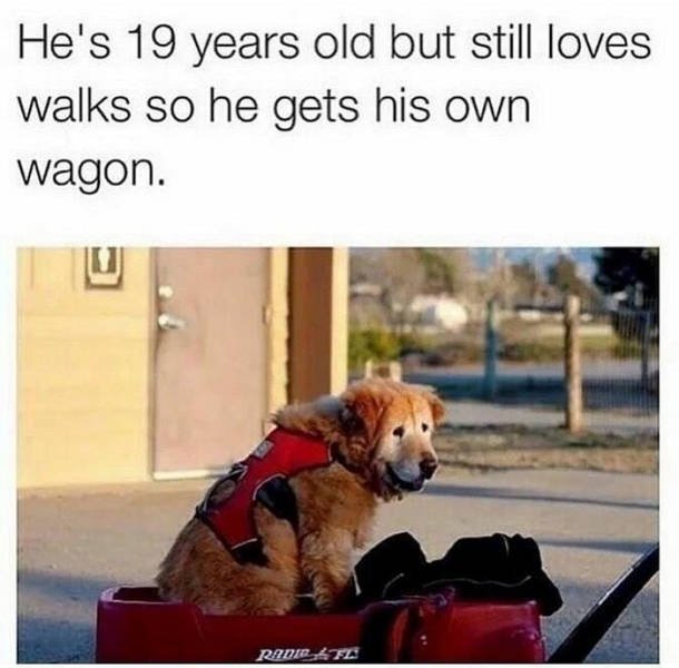 Wholesome Stories (42 pics)