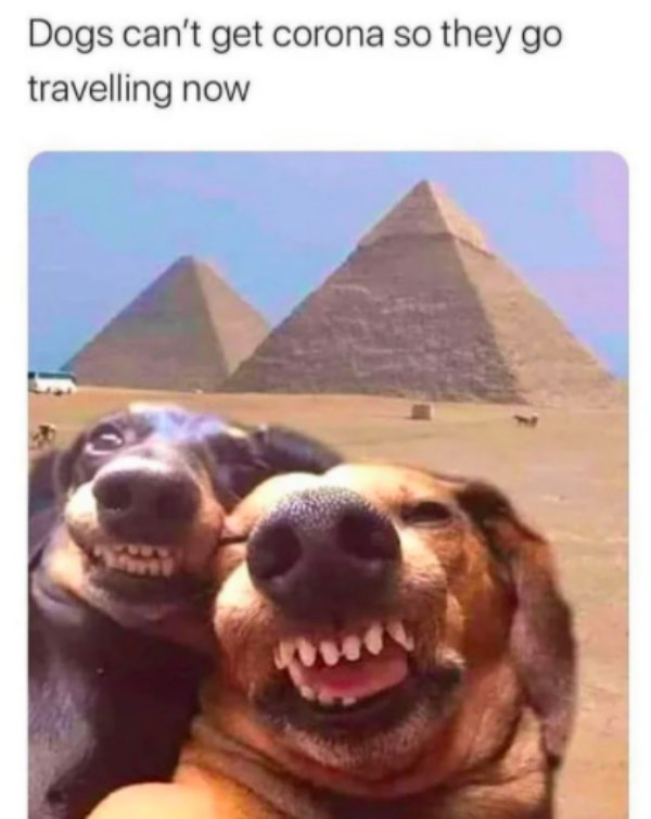 Quarantine Memes (30 pics)