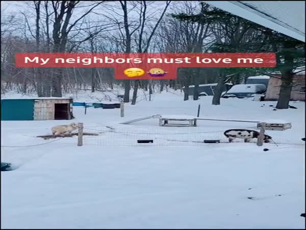 My Neighbors Must Love Me