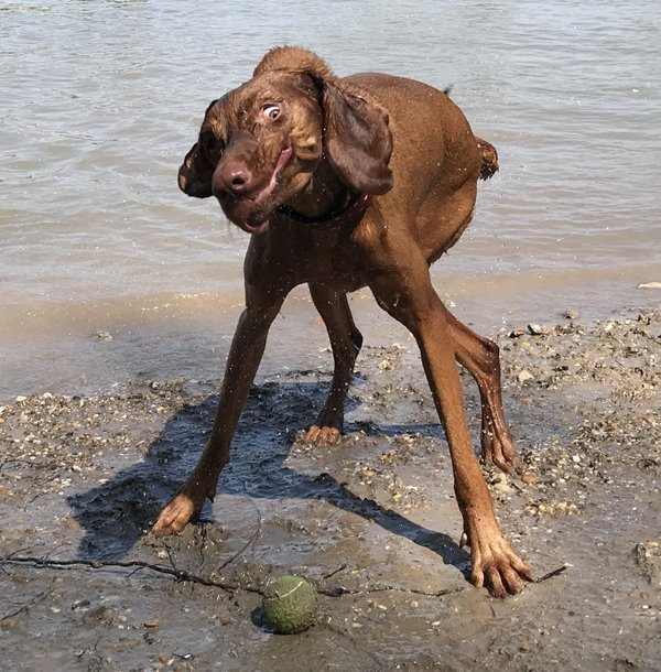 These Dogs Are Broken (29 pics)